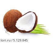 Купить «Кокос и пальмовый лист», фото № 5129845, снято 21 мая 2013 г. (c) Валентина Разумова / Фотобанк Лори