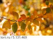Купить «Осенние листья», фото № 5131469, снято 5 октября 2013 г. (c) Наталья Наточина / Фотобанк Лори