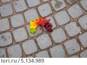 Купить «Осенние кленовые листья лежат на каменной мостовой autumn maple leaves lie on a stone pavement», фото № 5134989, снято 8 октября 2013 г. (c) Мария Сударикова / Фотобанк Лори