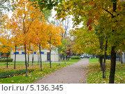 Аллея в парке осенью. Стоковое фото, фотограф Мария Сударикова / Фотобанк Лори
