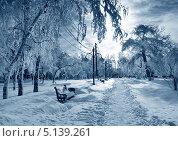 Дорожка в зимнем парке, фото № 5139261, снято 3 марта 2013 г. (c) ElenArt / Фотобанк Лори