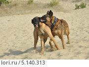 Две собаки играют. Стоковое фото, фотограф Elena Baranovskaya / Фотобанк Лори