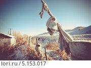 Череп животного на заборе (2011 год). Стоковое фото, фотограф Aleksandr Stzhalkovski / Фотобанк Лори