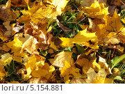 Желтые кленовые листья на траве. Стоковое фото, фотограф Чернова Анна / Фотобанк Лори
