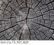 Купить «Текстура потрескавшейся древесины», фото № 5161429, снято 2 мая 2013 г. (c) Алексей Кокоулин / Фотобанк Лори
