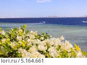 Водный пейзаж. Красное море. Стоковое фото, фотограф Степанова М Е / Фотобанк Лори