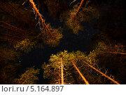 Звездное небо в лесу. Стоковое фото, фотограф Антон Журавков / Фотобанк Лори