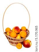 Нектарины и абрикосы в корзине. Стоковое фото, фотограф Сергей Видинеев / Фотобанк Лори
