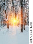 Купить «Солнечные лучи в зимнем лесу», фото № 5171501, снято 25 июня 2019 г. (c) Mikhail Starodubov / Фотобанк Лори