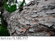 Муравьи, ползущие по стволу дерева. Стоковое фото, фотограф Андрей / Фотобанк Лори