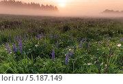 Весенний рассвет. Стоковое фото, фотограф Ермихина Оксана / Фотобанк Лори