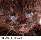 Портрет котёнка. Стоковое фото, фотограф Андрей Армягов / Фотобанк Лори