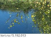 Октябрьское солнечное воскресенье на реке Воря. Стоковое фото, фотограф Вячеслав Сапрыкин / Фотобанк Лори