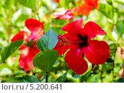 Роса на цветке. Стоковое фото, фотограф сергей юренков / Фотобанк Лори