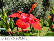 Красный цветок. Стоковое фото, фотограф сергей юренков / Фотобанк Лори