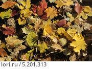 Осенние листья крупным планом в луже. Стоковое фото, фотограф Геннадий чупругин / Фотобанк Лори