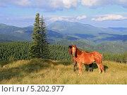 Купить «Лошади на летнем горном пастбище», фото № 5202977, снято 19 июля 2012 г. (c) Швадчак Василий / Фотобанк Лори