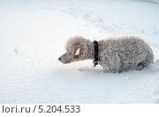 Пес готовится к прыжку. Стоковое фото, фотограф Андрей / Фотобанк Лори