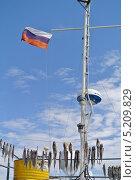 Байкальский омуль (2013 год). Редакционное фото, фотограф Gorelova Tatiana / Фотобанк Лори