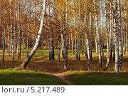Тропинка в березовом лесу. Стоковое фото, фотограф Владислав Тропин / Фотобанк Лори