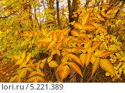 Осенний лес. Стоковое фото, фотограф Кузякин Иван / Фотобанк Лори