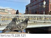 Купить «Петербург. Голуби на фоне Львиного моста», эксклюзивное фото № 5228121, снято 25 апреля 2013 г. (c) Александр Алексеев / Фотобанк Лори