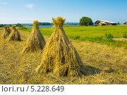 Пейзаж со стогами сена в поле и деревянным домом, снят на острове Кижи. Стоковое фото, фотограф ИВА Афонская / Фотобанк Лори