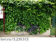 Велосипед у зелёной изгороди. Рим (2012 год). Редакционное фото, фотограф Алексей Хоруженко / Фотобанк Лори