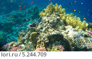 Купить «Подводный мир Красного моря», фото № 5244709, снято 21 сентября 2010 г. (c) Алексей Сварцов / Фотобанк Лори