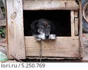 Грустный пес на цепи в будке. Стоковое фото, фотограф Kate Chizhikova / Фотобанк Лори