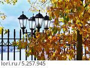 Жёлтые листья над железной оградой со старым фонарём. Стоковое фото, фотограф Нина Трубицына / Фотобанк Лори