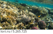 Купить «Подводный мир Красного моря», фото № 5265725, снято 18 сентября 2010 г. (c) Алексей Сварцов / Фотобанк Лори