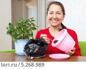 Пожилая женщина пересаживает комнатное растение в другой горшок. Стоковое фото, фотограф Яков Филимонов / Фотобанк Лори