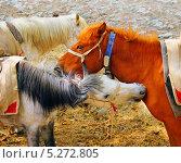 Разноцветные лошади на пастбище. Стоковое фото, фотограф Наталия Давидович / Фотобанк Лори