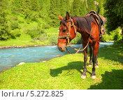 Лошадь в упряжке стоит на берегу горной реки. Стоковое фото, фотограф Наталия Давидович / Фотобанк Лори
