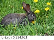 Купить «Кролик на зелёной траве», фото № 5284621, снято 19 мая 2013 г. (c) Марина Орлова / Фотобанк Лори
