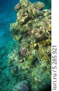 Купить «Морские кораллы, подводная съемка», фото № 5285921, снято 18 сентября 2010 г. (c) Алексей Сварцов / Фотобанк Лори