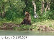 Медведь на берегу. Стоковое фото, фотограф АЛЕКСАНДР ЖАРКОВ / Фотобанк Лори