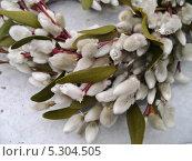 Купить «Венок из вербы», фото № 5304505, снято 6 марта 2011 г. (c) Корнилова Светлана / Фотобанк Лори