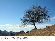 Купить «Дерево на горном склоне», фото № 5312905, снято 22 ноября 2013 г. (c) Игорь Веснинов / Фотобанк Лори