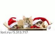 Купить «Три котенка в шапках Санта-Клауса сидят в коробке», видеоролик № 5313717, снято 26 ноября 2013 г. (c) Серёга / Фотобанк Лори