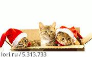 Купить «Три котенка  в новогодних шапках сидят в коробке», видеоролик № 5313733, снято 26 ноября 2013 г. (c) Серёга / Фотобанк Лори