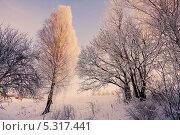 Купить «Зимний пейзаж», фото № 5317441, снято 19 марта 2019 г. (c) Майя Крученкова / Фотобанк Лори
