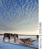 Купить «Тур на северных оленях», фото № 5319049, снято 25 февраля 2012 г. (c) Владимир Мельников / Фотобанк Лори