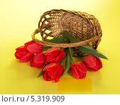 Купить «Красные тюльпаны в опрокинутой корзине на желтом фоне», фото № 5319909, снято 30 апреля 2013 г. (c) Сергей Молодиков / Фотобанк Лори