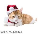 Купить «Рыжий котик в новогодней шапочке и шарфе», фото № 5320373, снято 28 ноября 2013 г. (c) Ирина Кожемякина / Фотобанк Лори