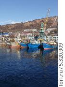 Купить «Петропавловск-Камчатский, суда, стоящие в порту», фото № 5320909, снято 9 ноября 2013 г. (c) А. А. Пирагис / Фотобанк Лори