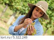 Купить «Девушка с кистью винограда», фото № 5322249, снято 17 сентября 2010 г. (c) Phovoir Images / Фотобанк Лори