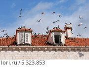 Купить «Дубровник. Голуби на крыше старого дома», эксклюзивное фото № 5323853, снято 20 сентября 2012 г. (c) Svet / Фотобанк Лори