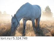 Купить «Лошадь, пасущаяся на поле», эксклюзивное фото № 5324749, снято 4 октября 2013 г. (c) Литвяк Игорь / Фотобанк Лори